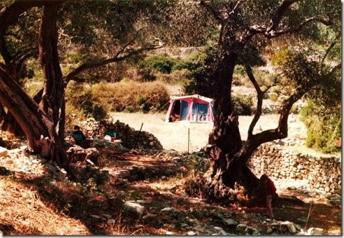 Griechenland 76 Camp in den Olivenbäumen -0040