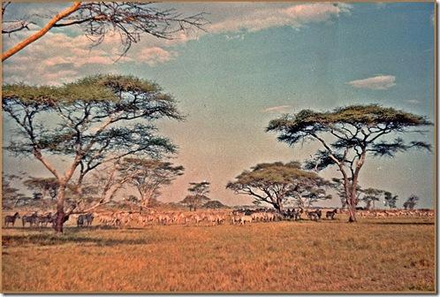 18 Afrika 69 Tansania Serengeti Nat.Park Savanne mit Tieren